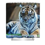 Tiger Posing Shower Curtain