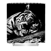 Tiger R And R Black And White Shower Curtain