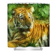 Tiger Resting Photo Art 02 Shower Curtain
