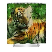 Tiger Resting Photo Art 03 Shower Curtain