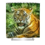 Tiger Resting Photo Art 05 Shower Curtain