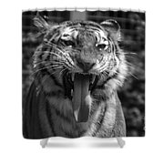 Tiger Say Aw Shower Curtain