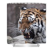 Tiger Smile Shower Curtain