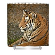 Tiger Stair Shower Curtain