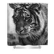 Tiger Stare In Black And White Shower Curtain