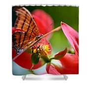 Tiger Stripped Butterfly Shower Curtain
