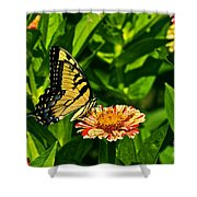 Tiger Swallowtail And Peppermint Stick Zinnias Shower Curtain