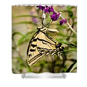 Tiger Swallowtail Butterfly Feeding Shower Curtain