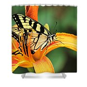Tiger Swallowtail Butterfly On Daylily Shower Curtain