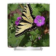 Tiger Swallowtail Butterfly On Geranium Shower Curtain