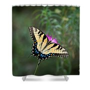 Tiger Swallowtail I Believe Shower Curtain