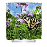 Tiger Swallowtail On Pincushion Flowers Shower Curtain