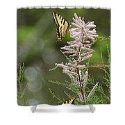 Tiger Swallowtails Shower Curtain