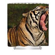Tiger Teeth Shower Curtain
