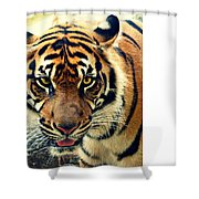 Tiger Tongue Two Shower Curtain