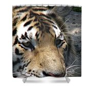 Tiger Water Shower Curtain