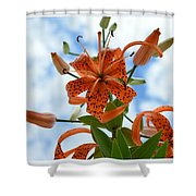 Tigers In The Clouds 8566 Shower Curtain