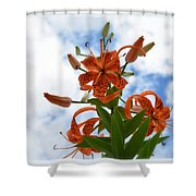 Tigers In The Clouds 8567 Shower Curtain