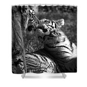 Tigers Kissing Shower Curtain