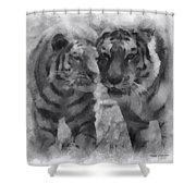 Tigers Photo Art 01 Shower Curtain