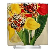 Tigridia Pavonia And Conchiflora Shower Curtain