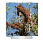 Tikal Furry Tree Closeup Shower Curtain