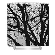 Tilia Night Silhouette Shower Curtain