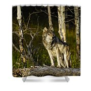 Timber Ghost Wolf Shower Curtain