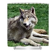 Timber Sunning Shower Curtain