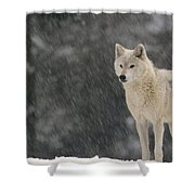Timber Wolf Female North America Shower Curtain