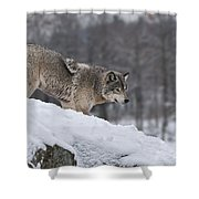 Timber Wolf On Hill Shower Curtain