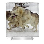 Timber Wolf  Pair Montana Shower Curtain