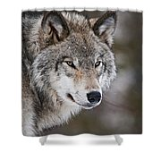Timber Wolf Pictures 1067 Shower Curtain