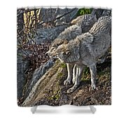 Timber Wolf Pictures 1094 Shower Curtain
