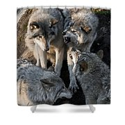 Timber Wolf Pictures 1096 Shower Curtain