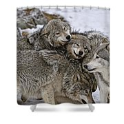 Timber Wolf Pictures 120 Shower Curtain