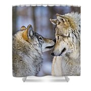 Timber Wolf Pictures 1230 Shower Curtain