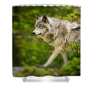 Timber Wolf Pictures 1329 Shower Curtain