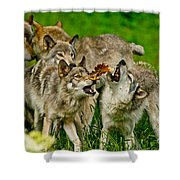 Timber Wolf Pictures 1593 Shower Curtain