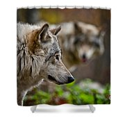 Timber Wolf Pictures 1693 Shower Curtain