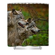 Timber Wolf Pictures 1710 Shower Curtain
