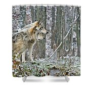 Timber Wolf Pictures 184 Shower Curtain