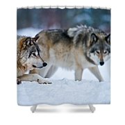 Timber Wolf Pictures 190 Shower Curtain