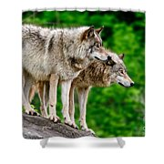 Timber Wolf Pictures 191 Shower Curtain