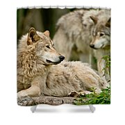 Timber Wolf Pictures 192 Shower Curtain