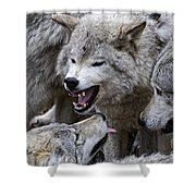 Timber Wolf Pictures 210 Shower Curtain
