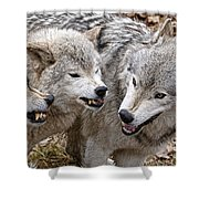 Timber Wolf Pictures 213 Shower Curtain