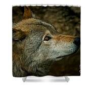 Timber Wolf Pictures 268 Shower Curtain