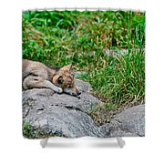 Timber Wolf Pictures 329 Shower Curtain