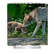 Timber Wolf Pictures 332 Shower Curtain